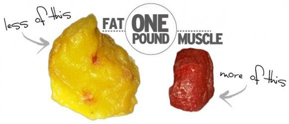 ONE_POUND_FAT_VS_ONE_POUND_MUSCLE