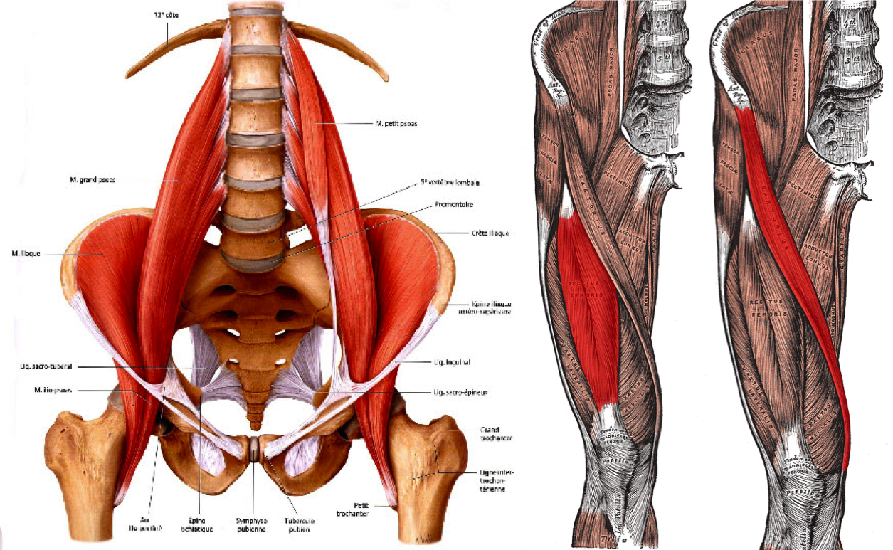 tight hip flexors pelvic tilt
