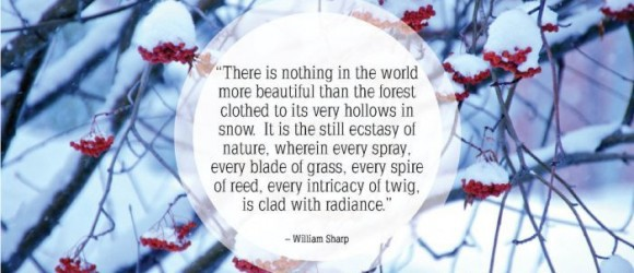 he snow falling outside has inspired today s quotes of the day