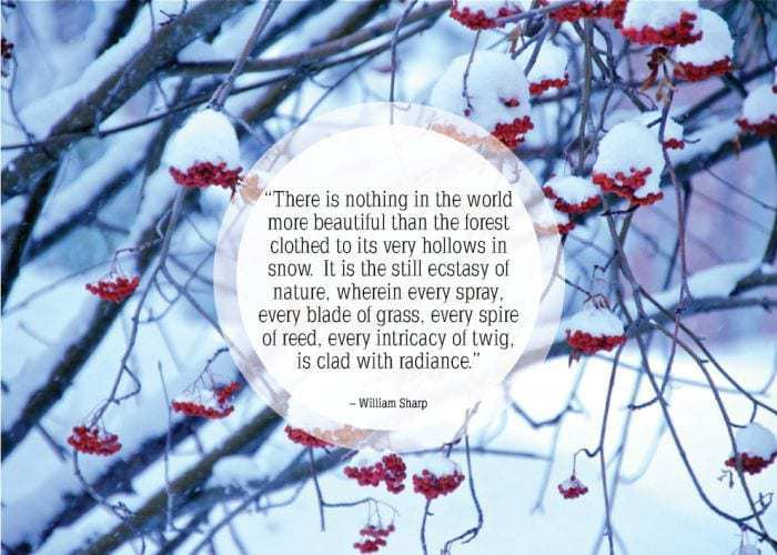 quotes of the week  snow bamboo core fitness